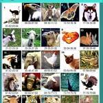 Jogo do Bicho – Animais, Números e Tabela